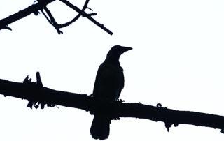 Titelbild - Der Wächter